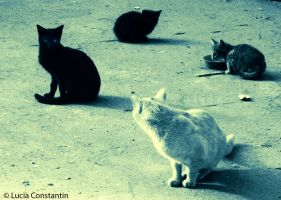The Jellicles Cats by LuciaConstantin