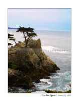 The Lone Cypress by trinity-77