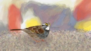 White-Throated Sparrow by elddiReMsihT
