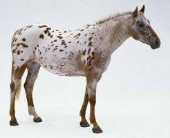 Appaloosa horse by wildwolves