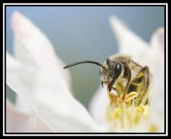 Blossom Bee by jesse-botanical