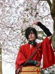 Koujaku- Cherry Blossoms by twinfools