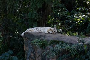 Sleeping Under The Shade by luccide