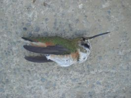 Dead Hummingbird dif angle by SN2