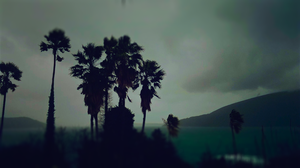 Palms over a bay by amokdroid
