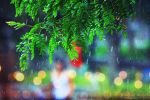 Colorful Rainy Day. ... by light-from-Emirates