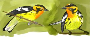 Blackburnian Warbler by creepygoth666