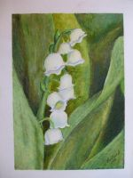 Lily of the Valley by ArtsyLady