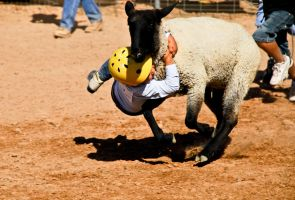 Rodeo by terryrunion