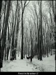 Forest in the winter 2 by Lukaydo