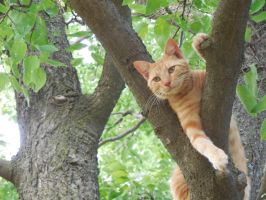 Ginger in a Tree by annajepsen