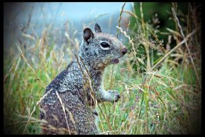 A Squirrel's Life by the Ocean by TeaPhotography