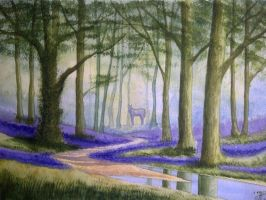 Into The Bluebell Woods by monikaholloway