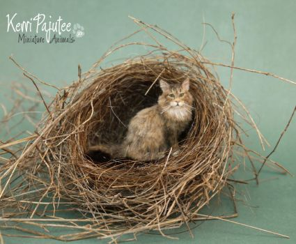 Miniature 1:12 Maine Coon Cat - Bailey by Pajutee