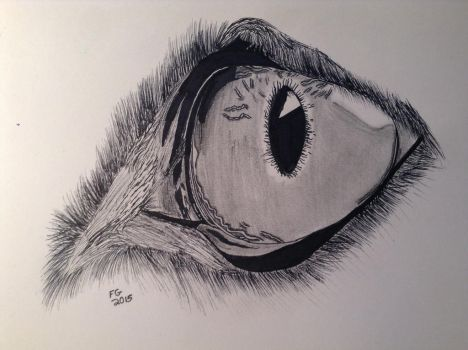 Realistic Wolf Eye by NINJAWERETIGER
