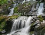2008 Calendar: Natures Beauty by desmo100
