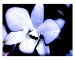 My Orchid 5 by keriwgd