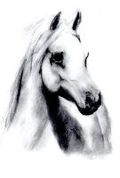 White Horse Drawing by slippy88