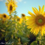 Sun's Up by IsacGoulart