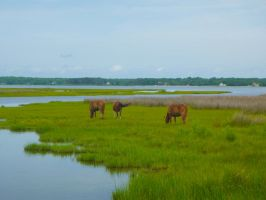 Assateague ponies V by snaphappy101