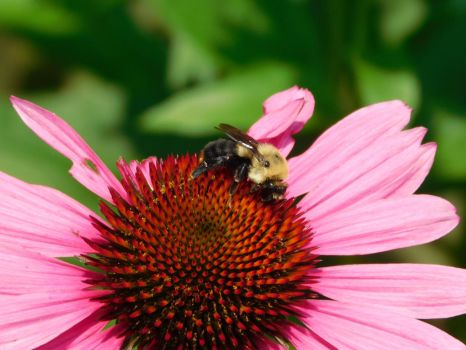 Bee on a Flower by Jyl22075