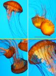 Sea Nettle Jellyfish by theresahelmer