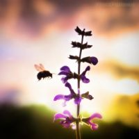 patient Bee by RickPatway