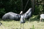 Bird stock 5 by Indrawn-stock