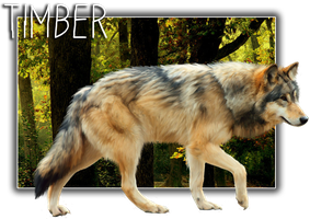 Timber by BV-Academy