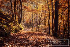 Autumn forest by Finvara