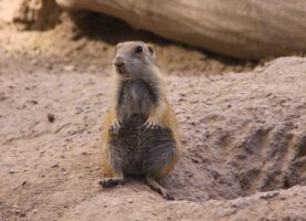 Prairie Doggie Chillin' by Caloxort
