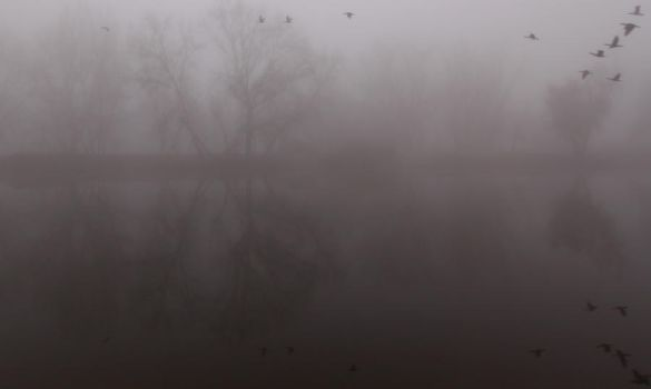 Fog and Geese by zootnik