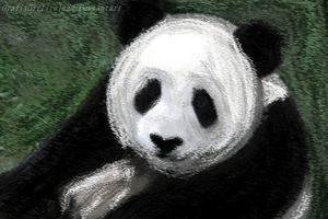 Chalk Panda by GrafixGirlIreland