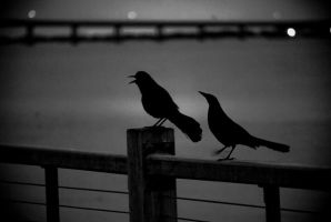 The Birds by aclay08