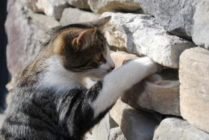Wall kitty by KindaConfused616