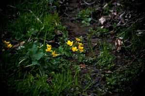 Tiny, cute flowers. by SteffenHa