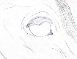 Horse Lineart Stock Eye by AOS2