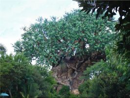 Tree of Life Animal Kingdom by WDWParksGal