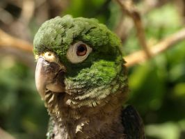 Baby Parrot by Debellos
