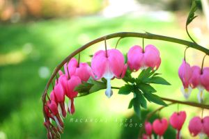 Bleeding Hearts by thebreat