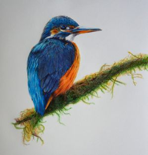 Kingfisher - Bics n Ballpoints by 6re9