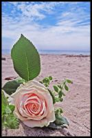 Beached Rose by TeaPhotography