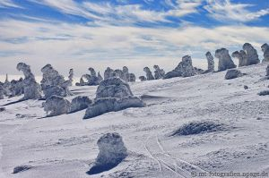 snow trees 1 by MT-Photografien