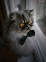 Gentleman Cat by BushfireHedgehog