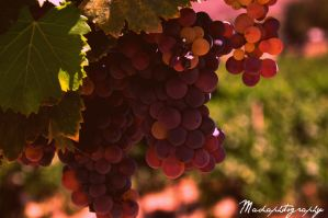 Grapes by madaphotography