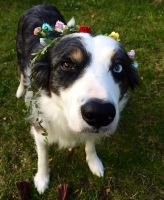 Dogs and flower crowns by Sirtainly
