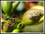 Ants by AnimalPlanetClub