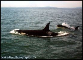 Canada: Orca 2 by McFit