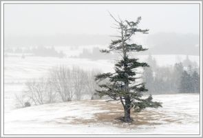 New Brunswick Winter 2 by Yorge