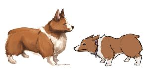 Corgis by PeopleEveryday